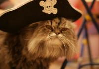 о печальных новостях на пиратском фронте…