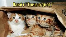празднично не Весь [ТРИ-В-ОДНОМ] (часть пятая: нифига не часовая)