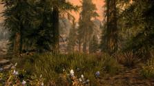 Большая подборка скриншотов Skyrim Special Edition.