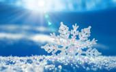 Снег и ничего вокруг. Глава 2.1