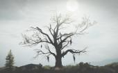 Большие бедствия войны в видеоиграх: дерево висельников