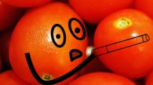 курилка помидорная