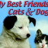 Сайт игры My Best Friends. Cats & Dogs