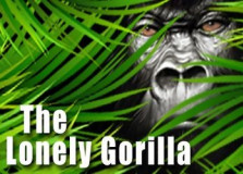 Lonely Gorilla, The