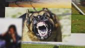 Авторы Resident Evil 7 хотели добавить в игру злую собаку и зомби, реагирующих на дыхание