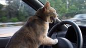 Создатели Cut the Rope анонсировали боевой мультиплеер про котов-гонщиков