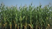 BioWare рекламирует Anthem при помощи кукурузного поля
