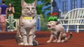 В ноябре в The Sims 4 появятся кошки и собаки
