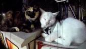Дебютный трейлер The Good Life— игры про убийство и котиков от создателя Deadly Premonition
