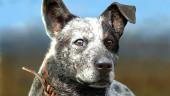 Если вы погладите пёсика из Far Cry 5, ему станет лучше