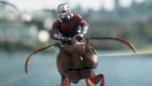 Скотт Лэнг и Хоуп ван Дайн объединяют усилия в свежем трейлере «Человека-муравья и Осы»