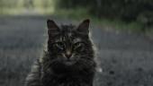 Котик нагоняет жути в трейлере фильма «Кладбище домашних животных»