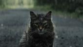 Страшный котик возвращается — свежий трейлер «Кладбища домашних животных»
