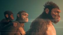 Примат становится всеядным в новом трейлере Ancestors: The Humankind Odyssey
