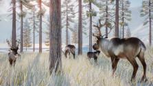 В декабре Planet Zoo получит зимнее дополнение с северными животными