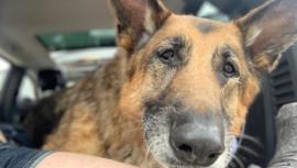 В память о собаке, которая стала прообразом Псины в Fallout 4, Microsoft пожертвовала $10 000 защитникам животных