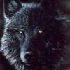 Wolfs_Heart
