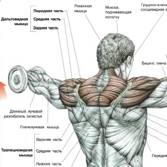 Как накачать верхние мышцы в домашних условиях