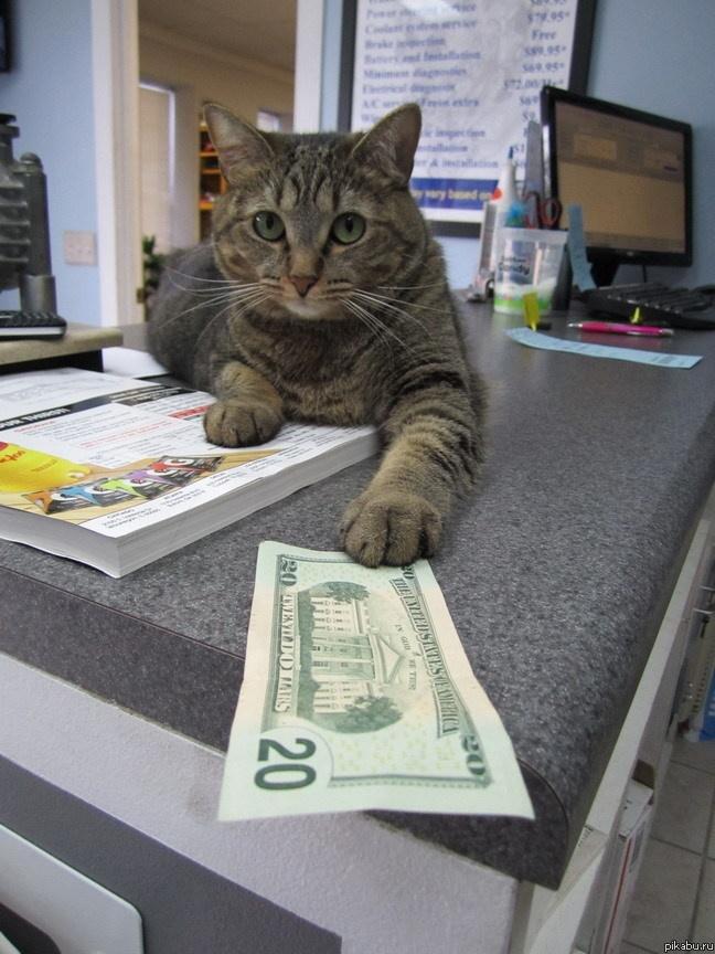 могут дайте денег смешные картинки картинки