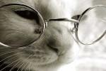 Размышления о котах.