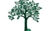 История «Западного Дерева»