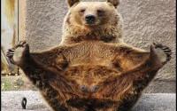 Мега анонс! Игра от создателей «Медведь горит в машине 2» и «Кто подставил красный квадратик»