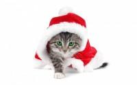 Для укрепления новогоднего настроения.