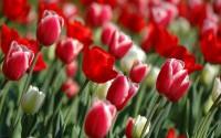 8 марта на СГ. Пост всея поздравлений или наносим ответный удар!