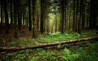 Объяснение сюжета The Forest