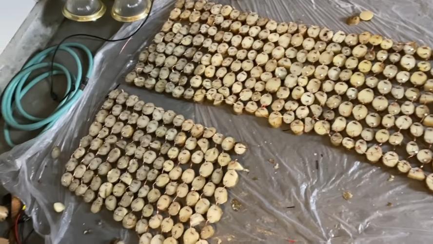 Doom запустили при помощи 45 кило картошки