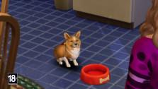 gamescom 2017. Кошки и собаки